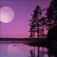 1705-moonlight-path-01_t (1).jpg