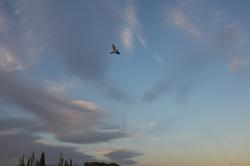 Quien vuela