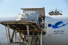 ANA Cargo Loading.jpg