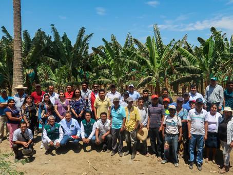 Cámara de Comercio de Piura implementa medidas prácticas de bioseguridad en fincas bananeras