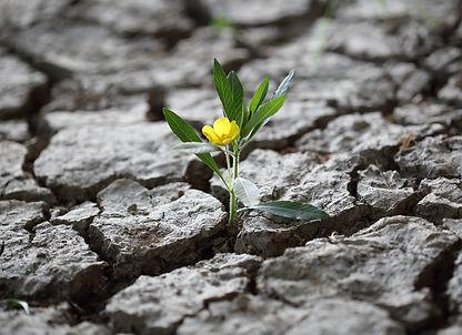 Flor_desierto_resiliencia.jpeg