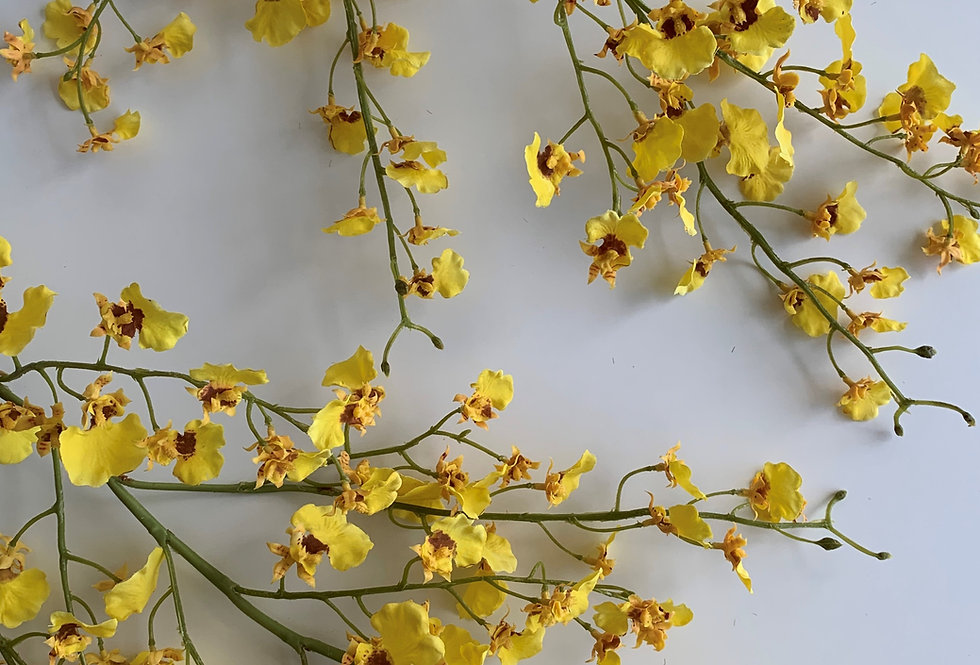 DANCING ORCHID IN YELLOW