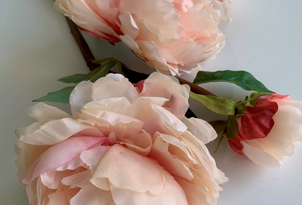 CLASSIC PEONY IN PINK
