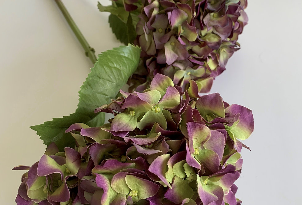 DRIED PURPLE HYDRANGEA