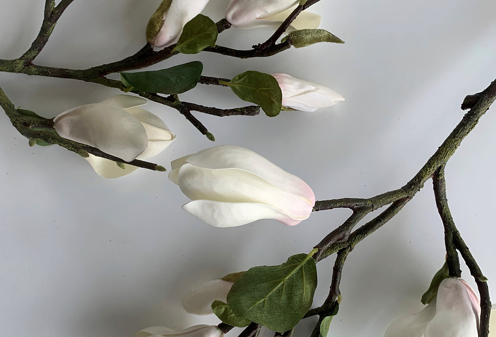 SHORT WHITE MAGNOLIA
