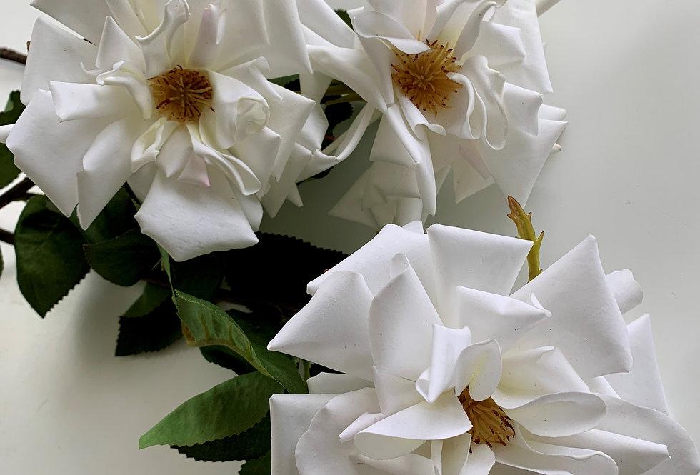 ROSE -WHITE