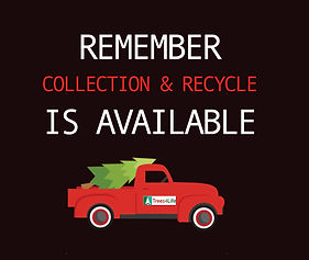 Christmas tree collection & recycle