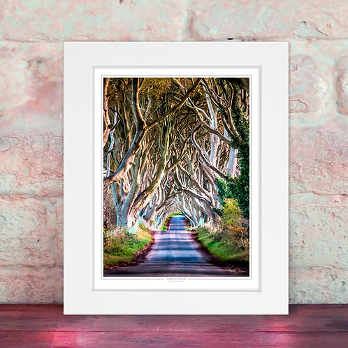 Dark Hedges Colour