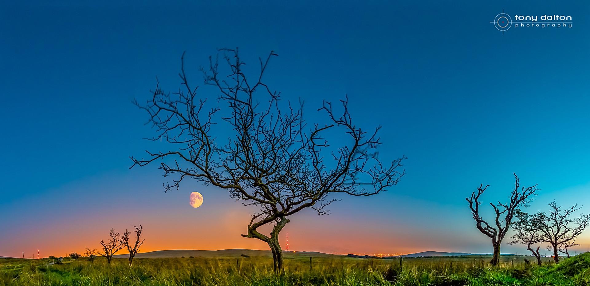 Blackmountain Moonrise