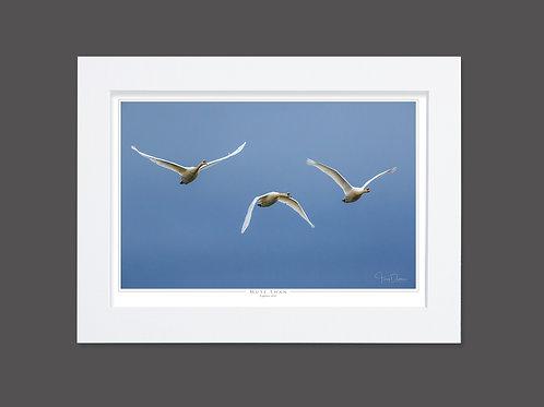 Mute Swan Trilogy