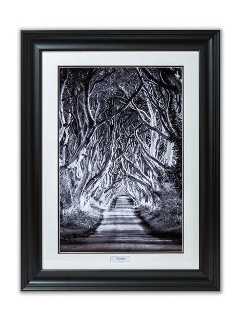 Dark Hedges, Co. Antrim