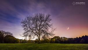 Sir Thomas and Lady Dixon Park Moonrise