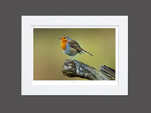King Robin