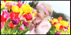 madtulips-7