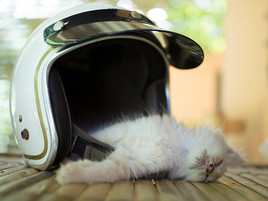 Kitten_3.jpg