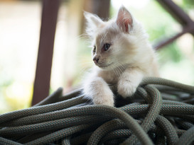 Kitten_4.jpg