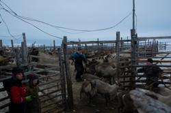 Pastores de renos Komi