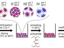 Опубликована новая научная статья в высокорейтинговом журнале Polymers