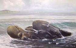 Wet rocks at DunLaoghaire