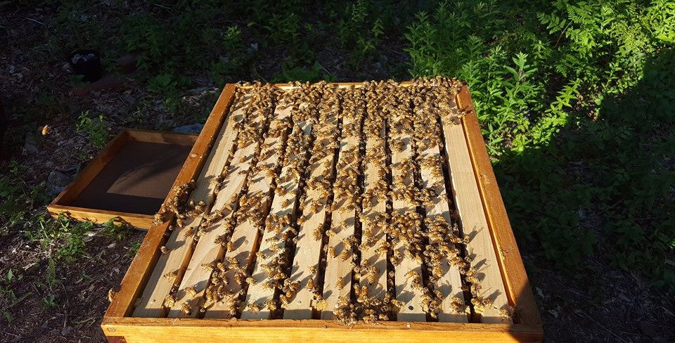 Hive Rental ($300 - Total)