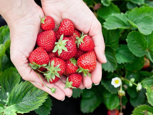 Entenda a importância dos antioxidantes para o corpo.