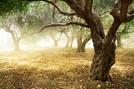 Los bosques españoles por orden alfabético