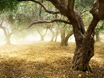 Olive Oil - Nature's Fruit Juice