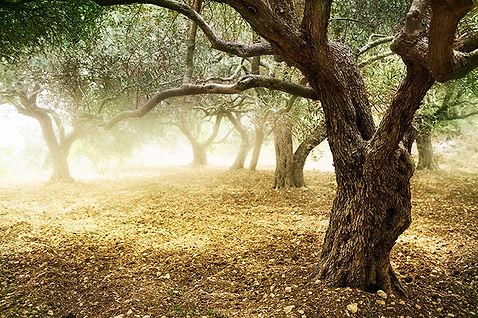 Forêt déserte et embrumée