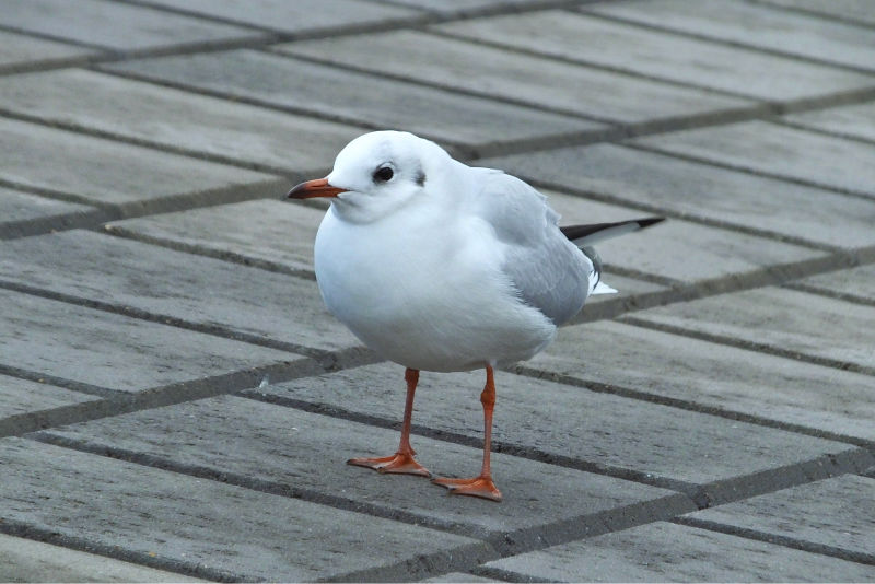 Bremerhaven 3