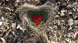 coeur nature 2.jpg