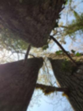 arbres nature.jpg