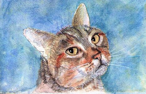 cat-portrait-painting-drawing-watercolor