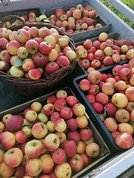 Apfelpflücken 112020 Schulfrühstücka.jpg