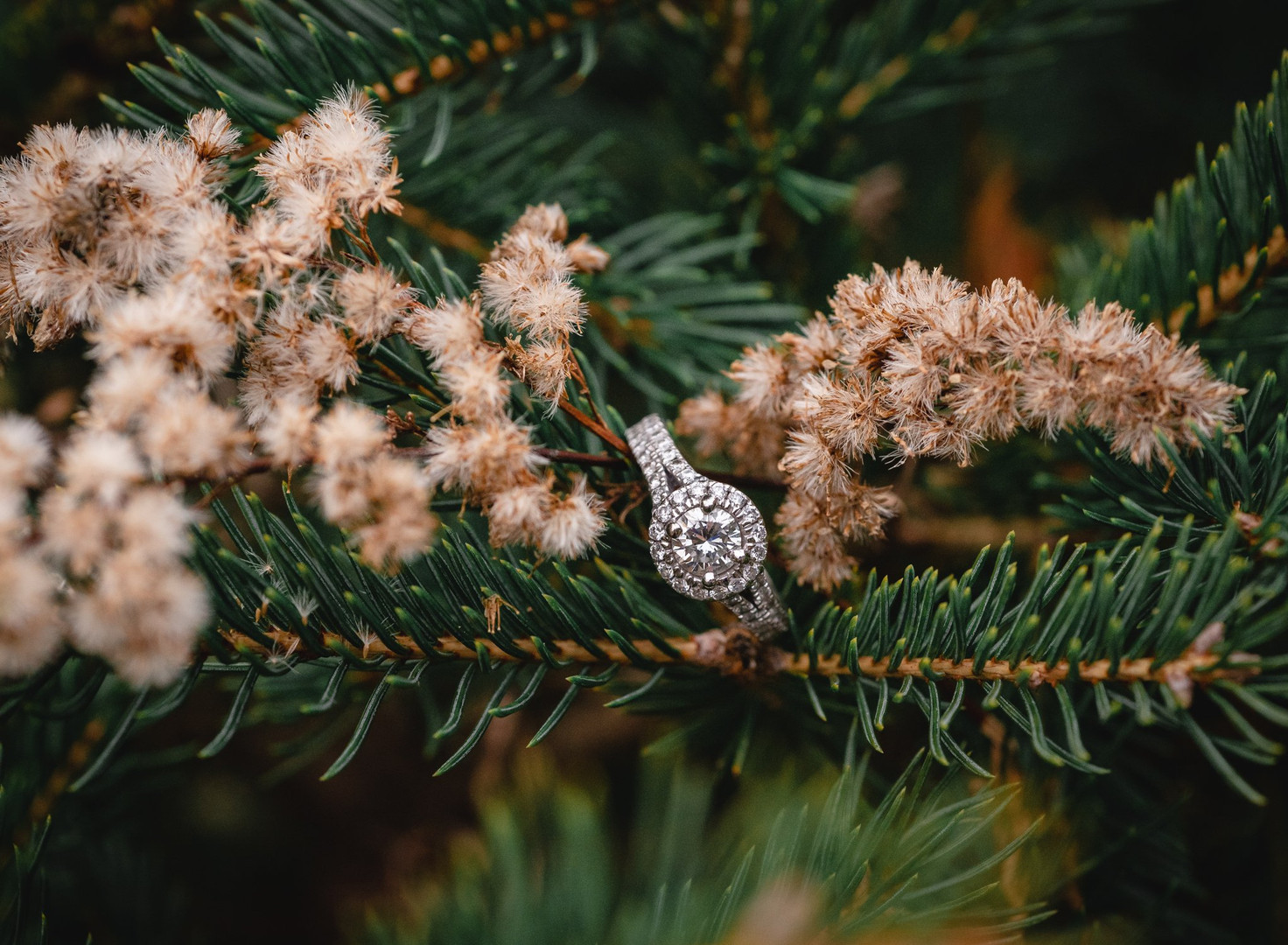 fancy engagement ring inside Christmas tree branch