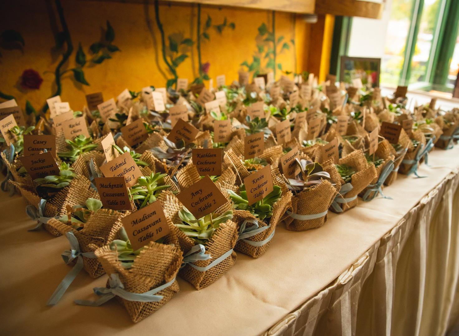 Connecticut succulent wedding favors