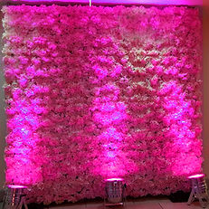 FLOWER WALL UPLIGHT HIRE
