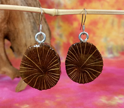 Driftwood End Grain Earrings