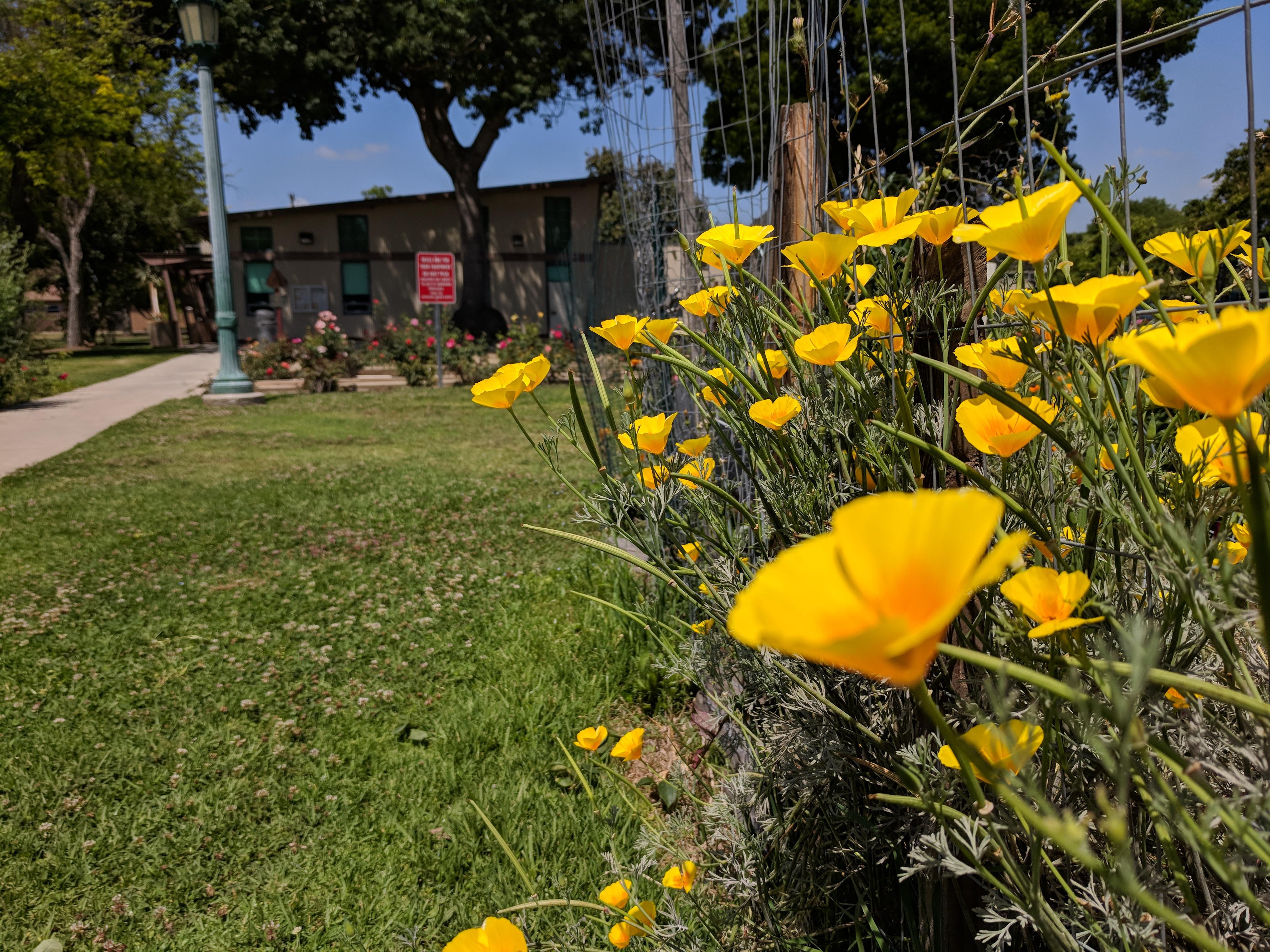 Southern California Garden Club
