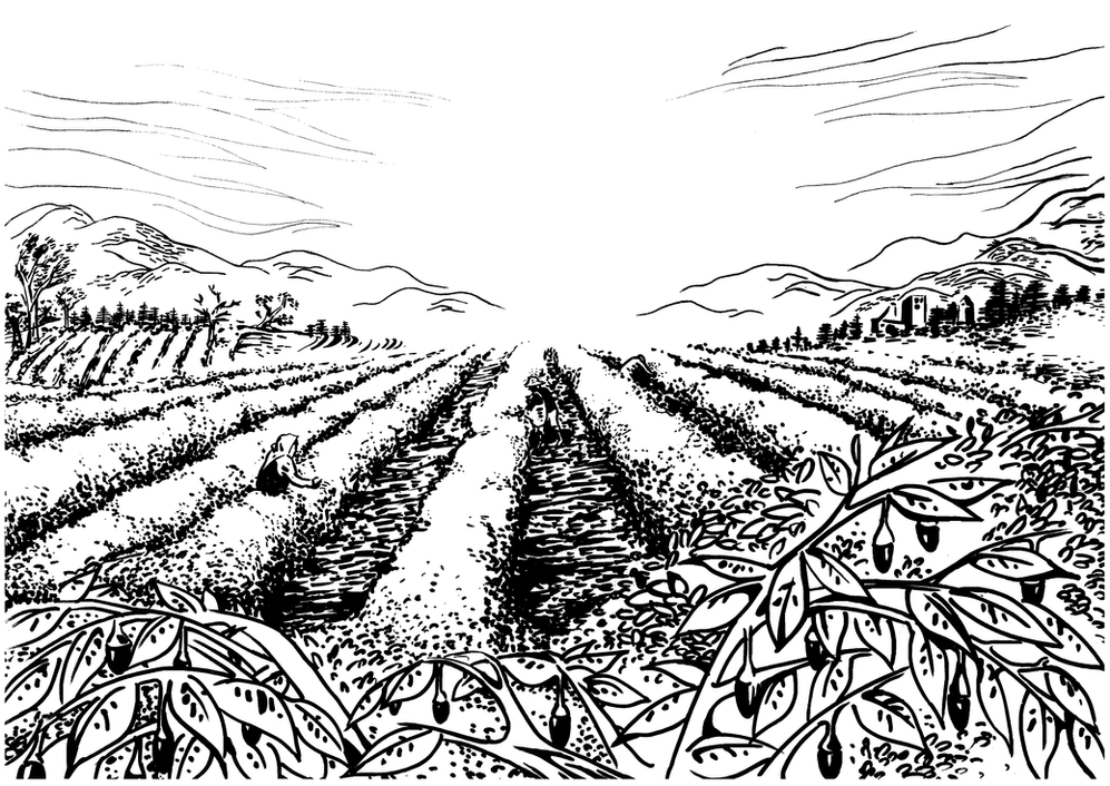 Lycium chinensis farm