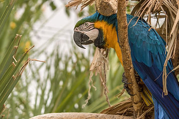 bird-3167441_1920.jpg