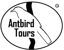 antbird tours_tm_edited.png
