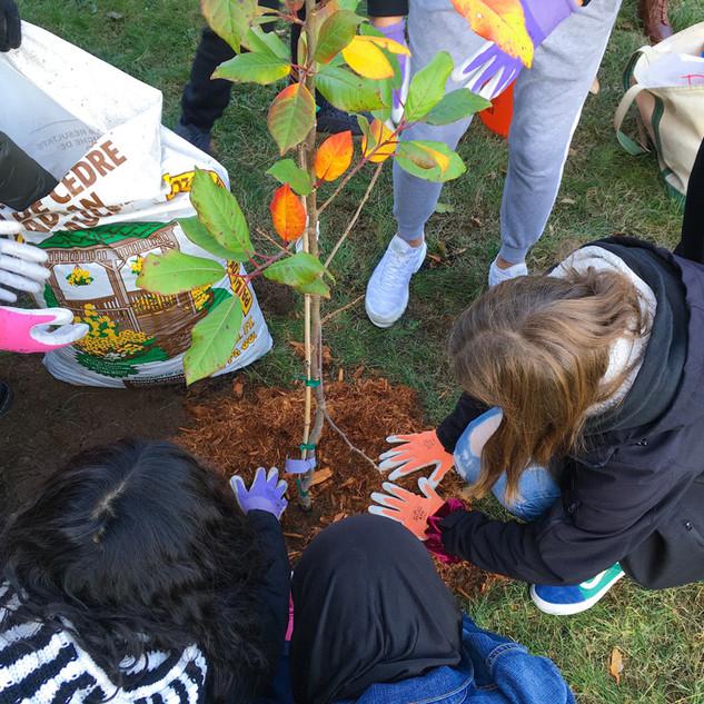Tree Planting Fall 2019