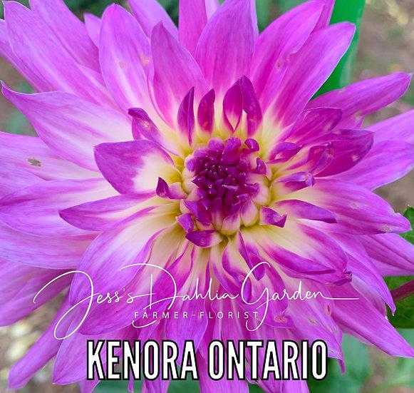 Kenora Ontario
