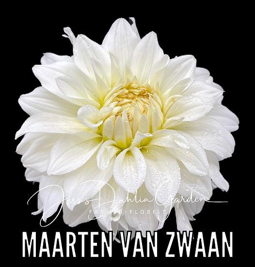 Maarten (Karma) Van Zwaan