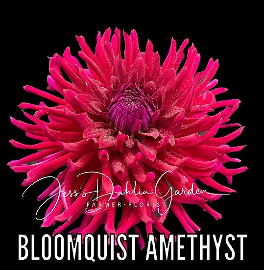 Bloomquist Amethyst