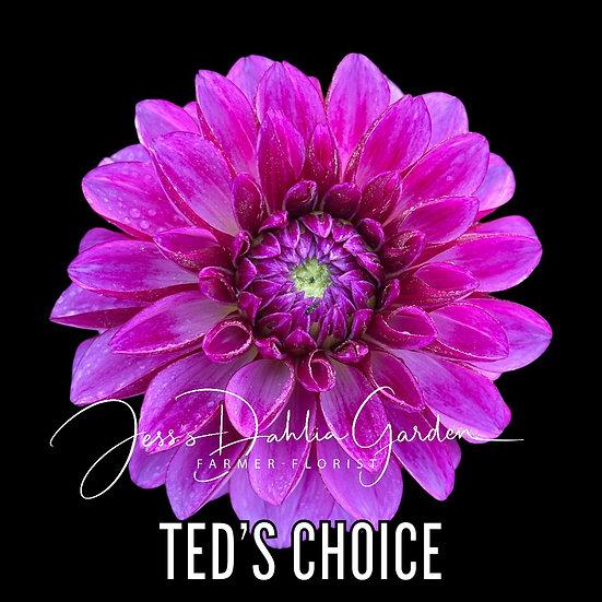 Ted's Choice