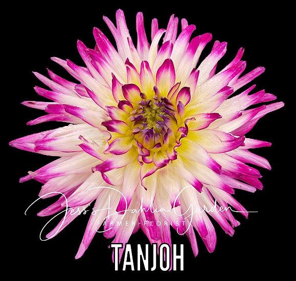 Tanjoh