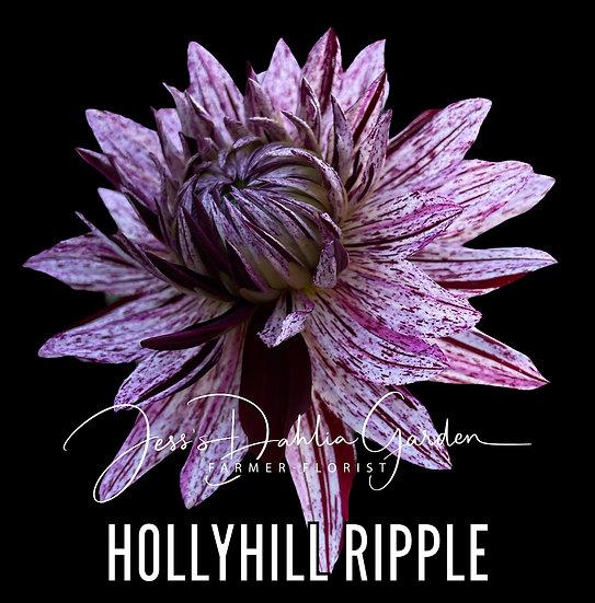 Hollyhill Ripple