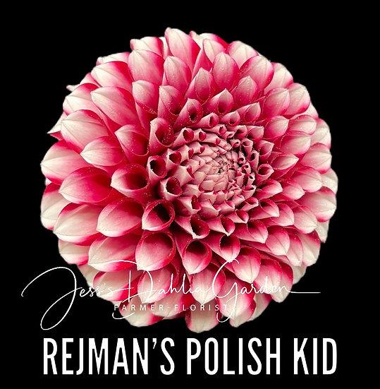 Rejman's Polish Kid