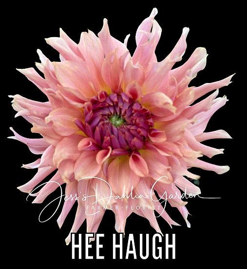 Hee Haugh